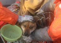 Rescatado un perro en Japón tras permanecer 21 días a la deriva