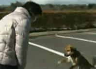 Perra japonesa rescatada después de tres semanas se reencontró con su dueña (+Video)