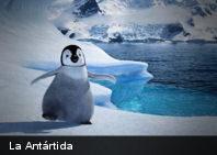 La Antártida lleva sin vegetación 12 millones de años