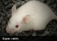 Científicos suizos crean el 'súper ratón'