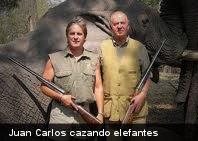 Si continúa la caza furtiva el elefante desaparecerá en 20 años