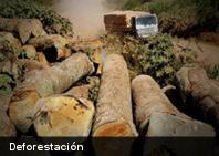 Ecología: El crimen organizado es culpable del 90 % de la deforestación del planeta