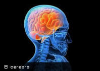 Científicos crean el primer cerebro de laboratorio