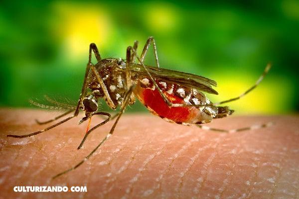 El Zika preocupa a estadounidenses