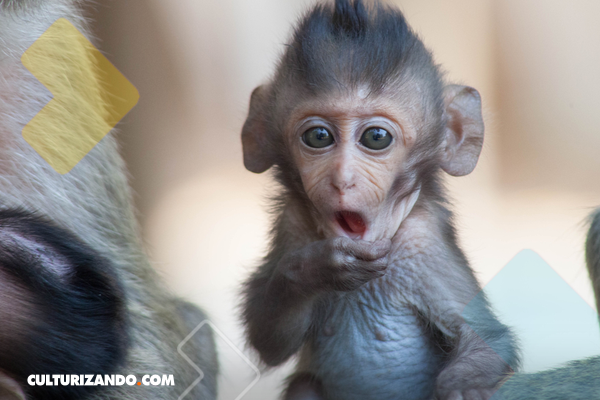 Por primera vez dos monos son clonados en China
