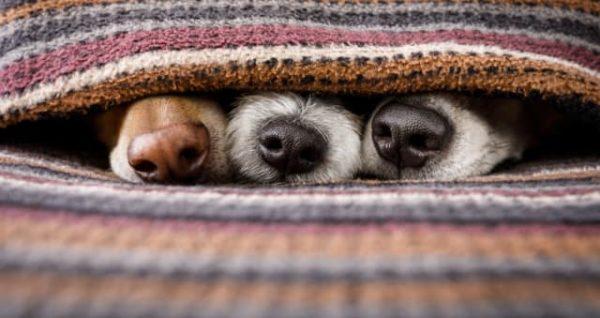 ¡Mira estos tráilers caninos!