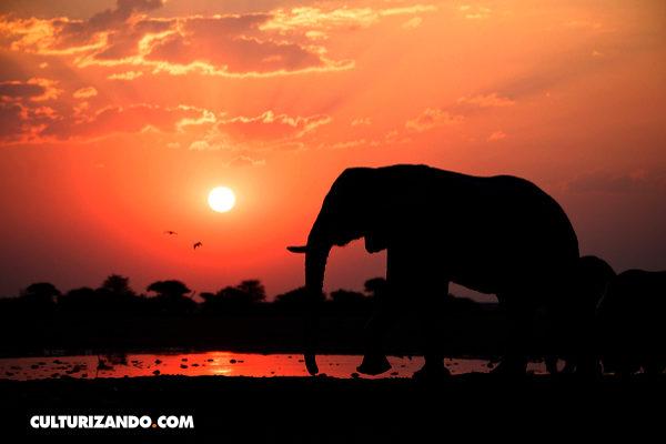 Matanza de elefantes en Botsuana, la más grande en la historia de África