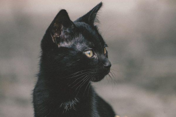 La razón por la que un pueblo de Nueva Zelanda quiere prohibir los gatos
