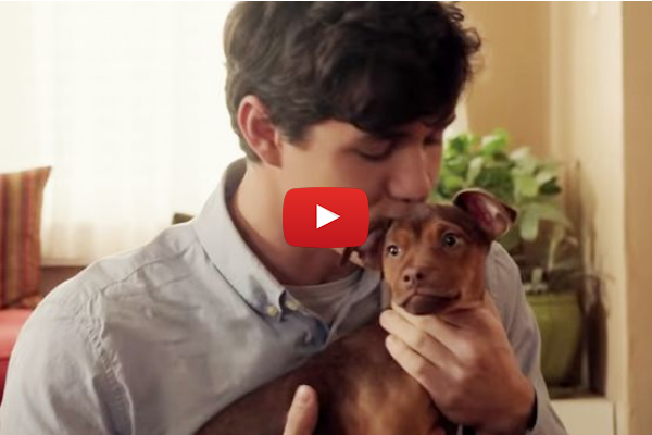 Conoce esta bella historia de perritos con el tráiler de 'A Dog's Way Home'