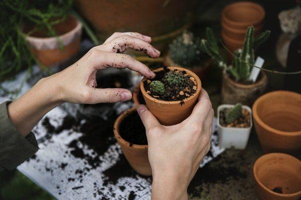 ¿Será posible? Cómo generar plantas resistentes a la sequía sin perjudicar a su crecimiento