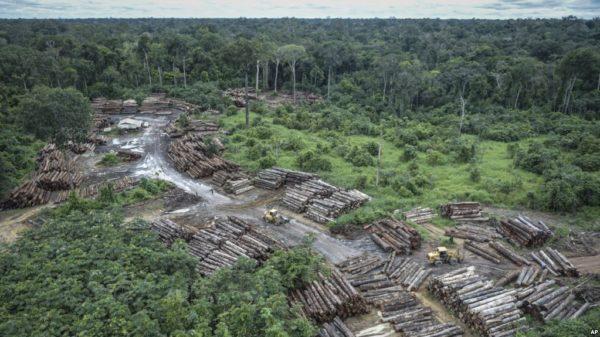 Deforestación en el Cerrado de Brasil cae 11%, según el gobierno