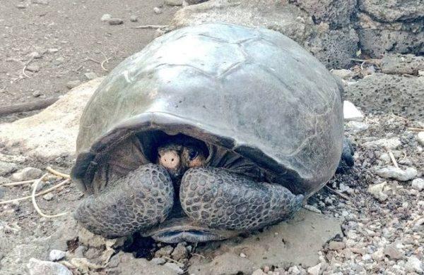 Hallan tortuga gigante que se consideraba extinta desde hace un siglo