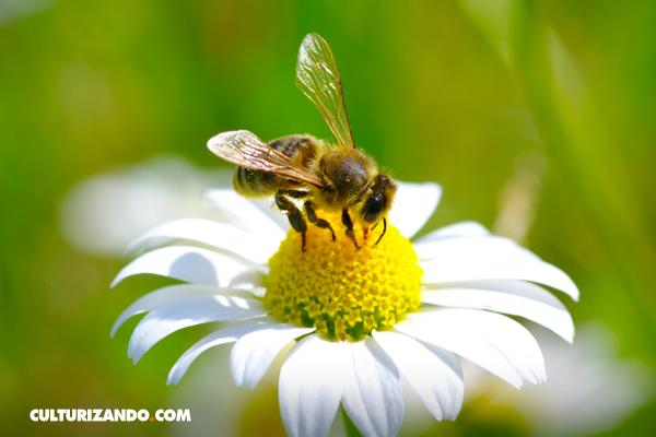 Estudio: en cien años se acabarán los insectos
