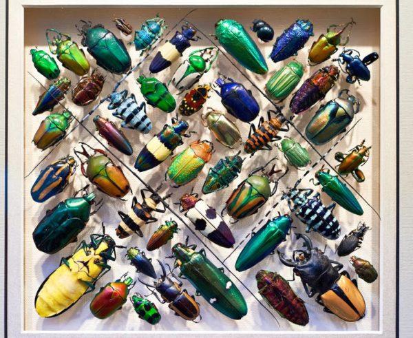 ¿Qué ocurriría en la naturaleza si desaparecieran los insectos?