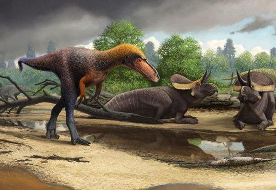Descubren los restos fósiles de un primo pequeño del 'Tyrannosaurus rex'