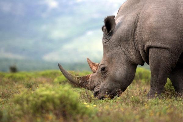 Un millón de especies animales y vegetales están en riesgo de extinción