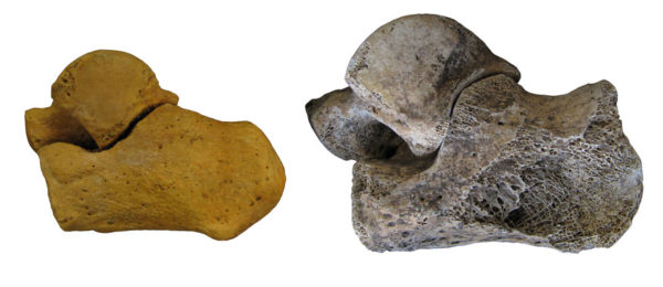 Nuevas fórmulas estadísticas para asignar el sexo a fósiles humanos