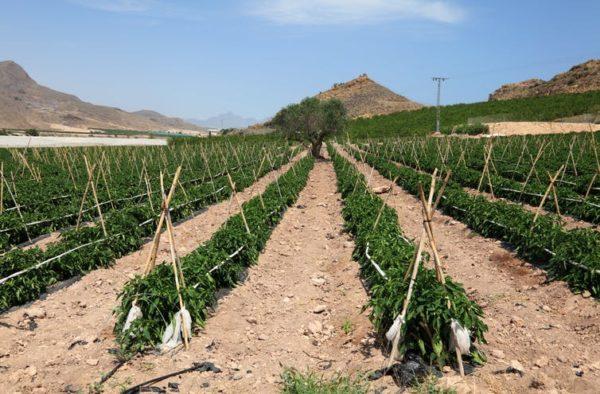 El coste ambiental de cultivar hortalizas en el desierto