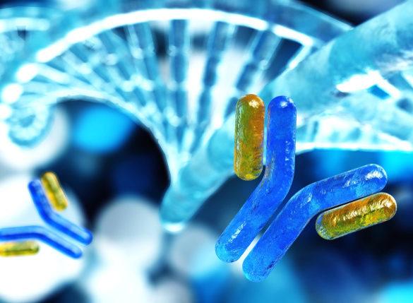 Desarrollan anticuerpos que bloquean una de las vías de entrada del ébola en células humanas
