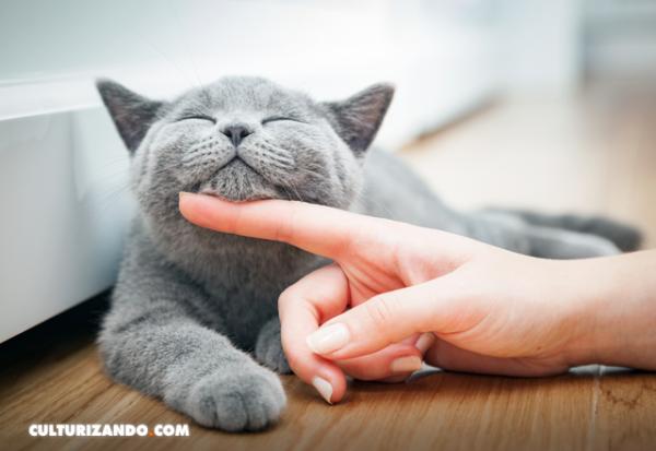 Cómo acariciar a su gato, según la ciencia