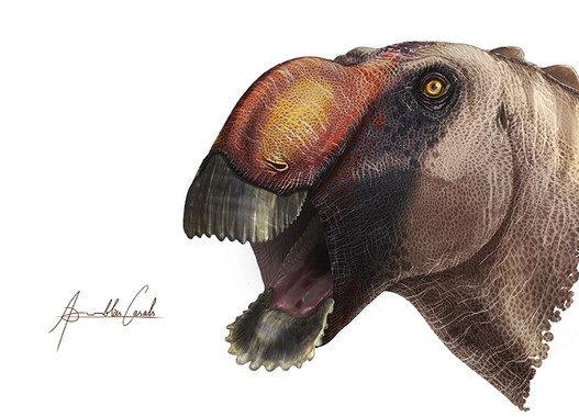 Identificada una extraña nueva especie de dinosaurio 'pico de pato'