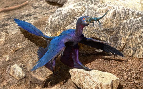 Una nueva especie de lagarto aparece en el estómago de un microraptor