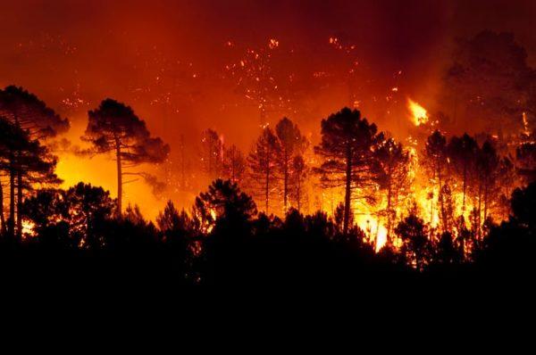 Cómo prevenir incendios forestales usando medidas mitigadoras del cambio climático