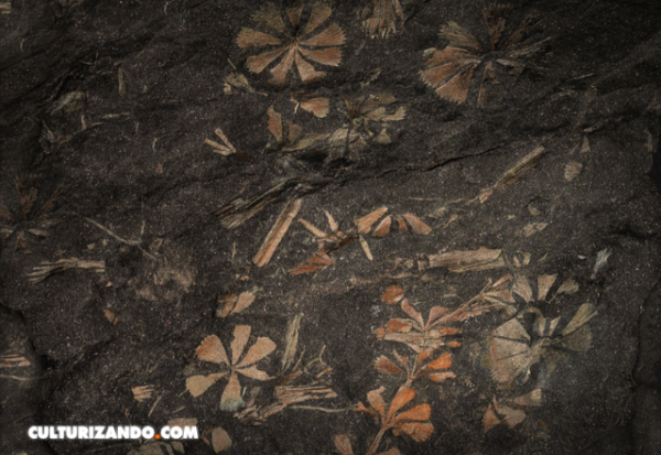 Descubren el bosque fósil más antiguo de Asia