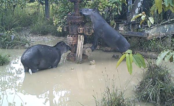 Hallan altas concentraciones de plomo en la fauna silvestre de la Amazonia