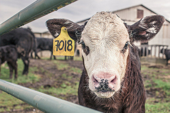 La ONU pide reducir el consumo de carne para frenar el cambio climático
