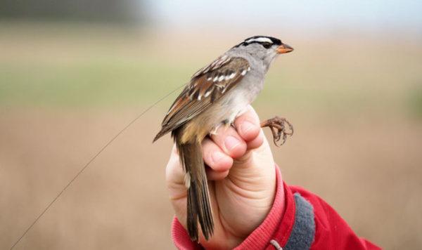 Los insecticidas amenazan la supervivencia de las aves silvestres