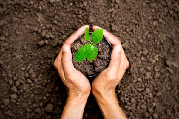 Joven planta 1 millón de árboles a los 12 años