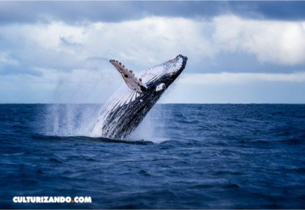 Inteligencia artificial para detectar y contar ballenas en el mar