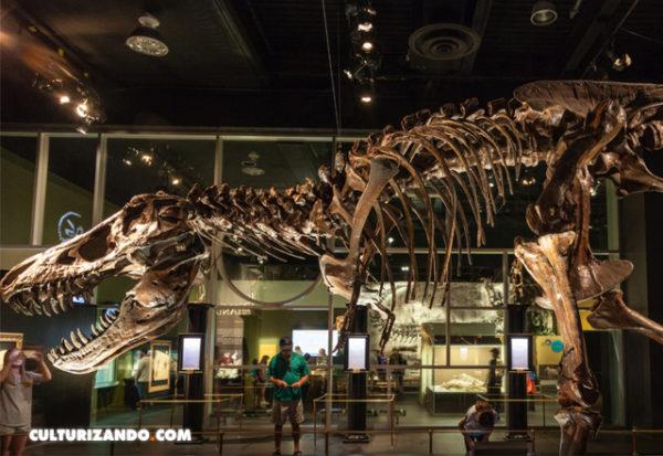 Hallan uno de los más antiguos y completos dinosaurios carnívoros del Jurásico