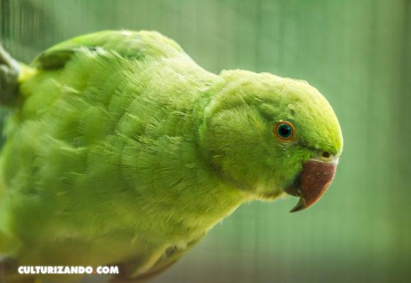 Solo diez especies se han recuperado en medio de la crisis de biodiversidad