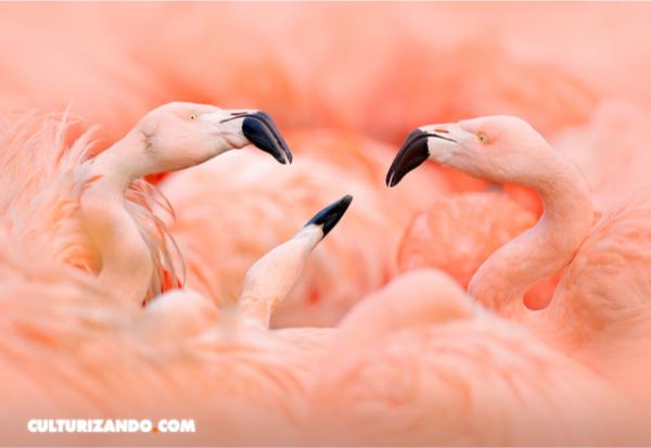 ¿Qué se siente al ser pájaro? Los sentidos de las aves, al descubierto