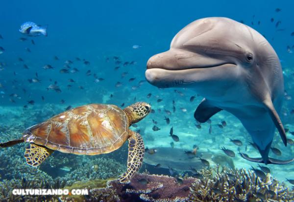 ¿Qué especies dominarían la Tierra si los humanos nos extinguiéramos?