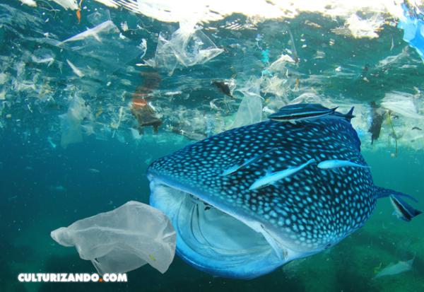 La contaminación química del plástico, una amenaza silenciosa