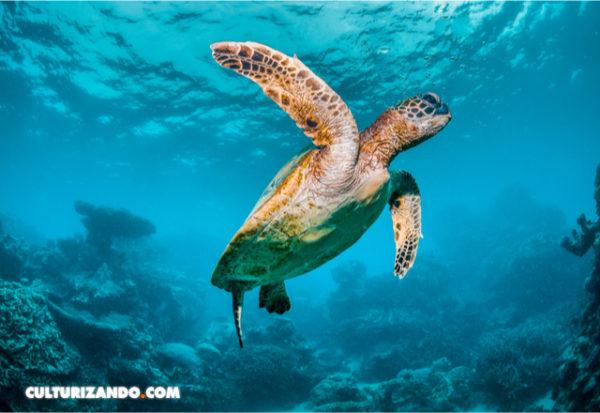 Una única tortuga primitiva resistió a la extinción masiva en el hemisferio norte