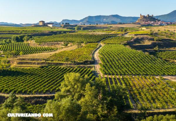 La diversidad de los viñedos mitigará el impacto del cambio climático