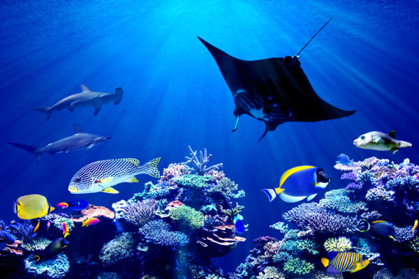 Especies oceánicas que están camino a la extinción