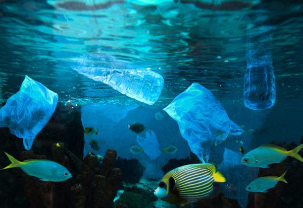 El plástico envenena y mata a la fauna de los océanos