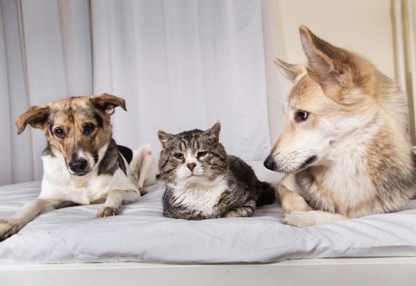 Corea del Sur  empieza a realizar pruebas de COVID-19 para las mascotas
