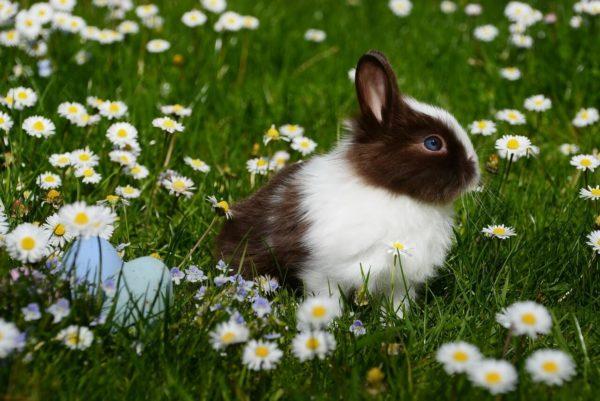 Cruelty free: 5 marcas que no prueban sus productos en animales