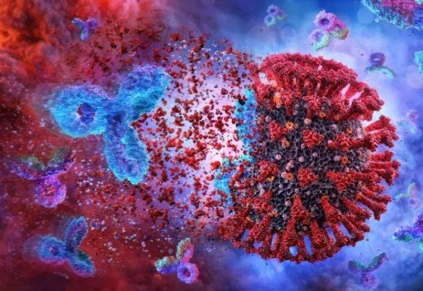¿Dejaremos de estar protegidos frente al coronavirus cuando disminuyan nuestros anticuerpos?