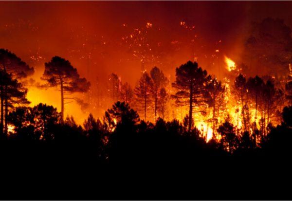 ¿Por qué ahora hay más incendios y son más peligrosos?